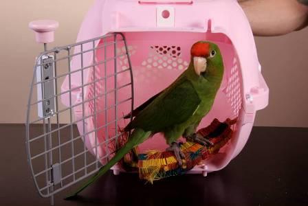 Transportburar för fåglar