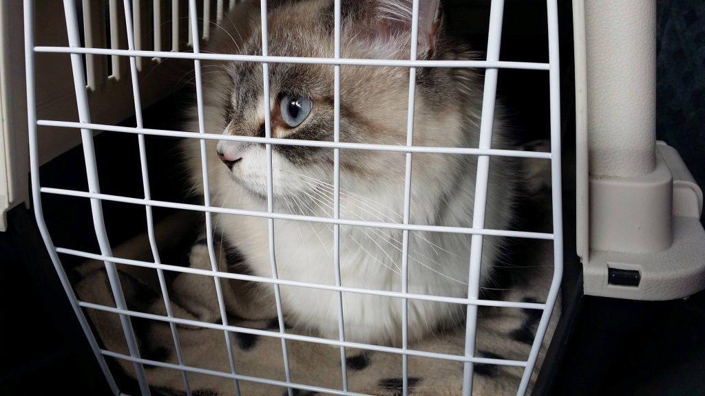 En katt som sitter i en kattbur