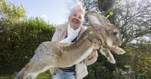 worlds-largest-rabbit-darius-jeff-fb